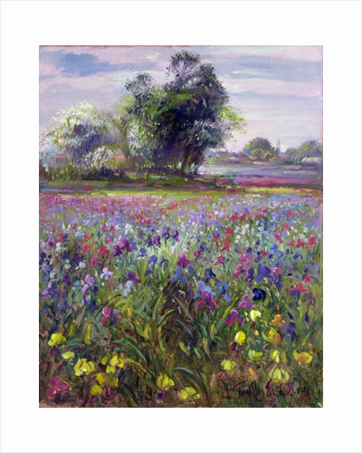 Irises and Distant May Tree by Timothy Easton