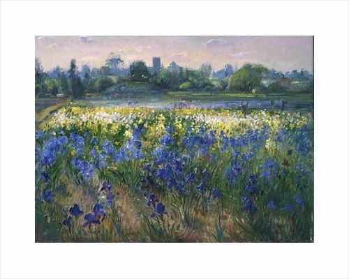 Blue Haze at Burgate by Timothy Easton