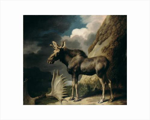 Moose, 1770 by George Stubbs