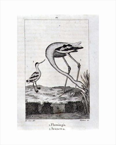 Flamingo and Avosetta by Spanish School