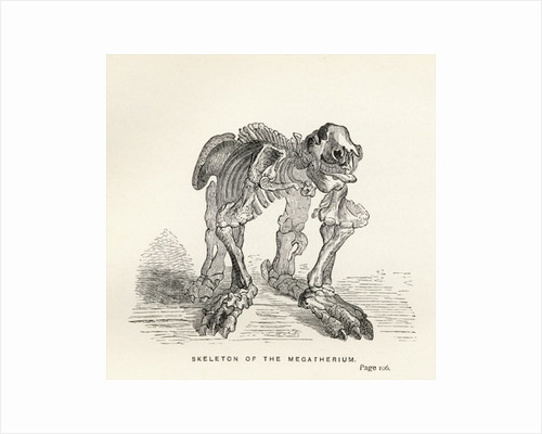 Skeleton of the Megatherium by English School
