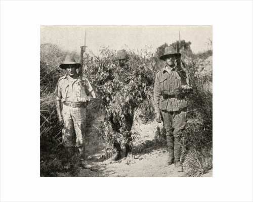 A Turkish sniper, disguised as a bush, in custody after being captured by ANZAC troops by English Photographer