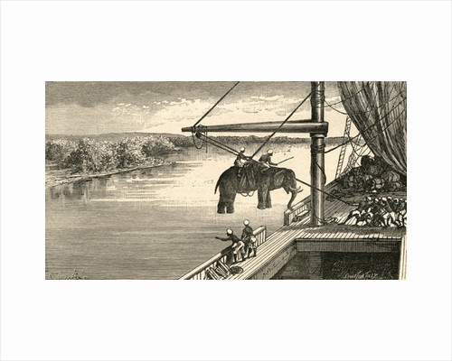 Transportation of elephants from India to Africa, where they were used to carry supplies in the exploration expeditions of the 19th century by Anonymous
