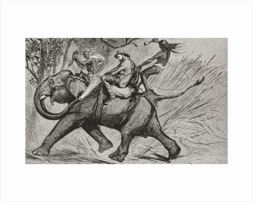 Cartoon of the Victorian era showing Albert Edward Prince of Wales riding an elephant and being sprayed with water from its trunk by Anonymous