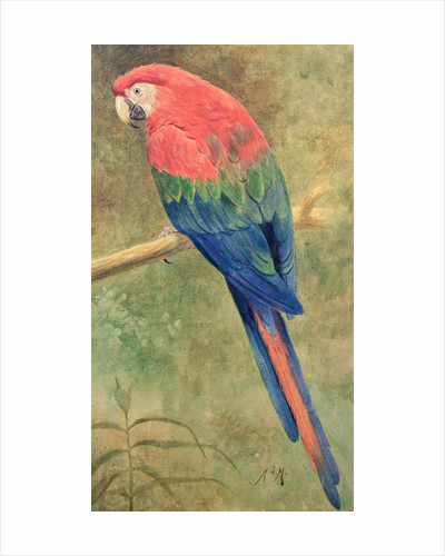 Red and Blue Macaw by Henry Stacey Marks