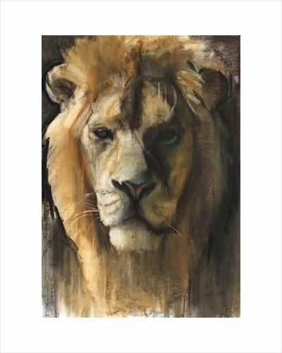 Asiatic Lion by Mark Adlington