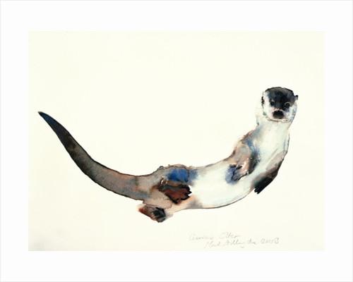 Curious Otter by Mark Adlington