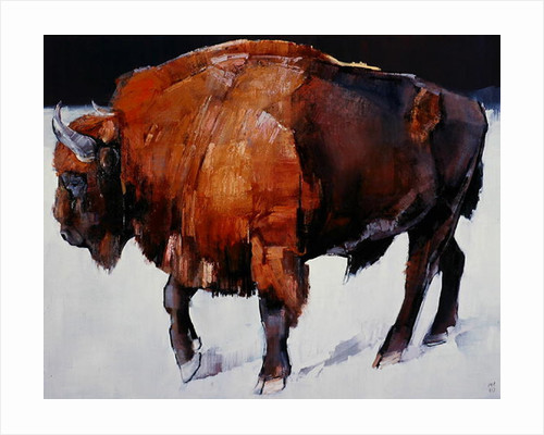 European Bison by Mark Adlington