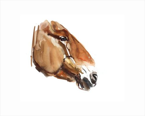 Ancient Head (Przewalski) 2012 by Mark Adlington