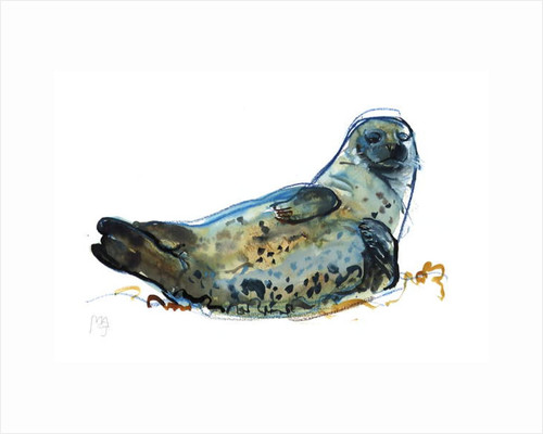 Westcove seal, 2019 by Mark Adlington