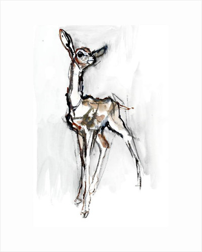 Gerenuk fawn, Sarara, 2018 by Mark Adlington