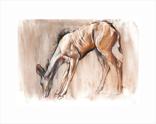 Young Kudu, Loisaba, 2018 by Mark Adlington
