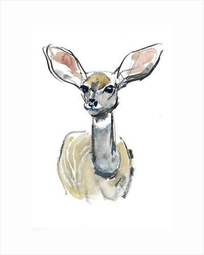 Kudu Fawn, Sarara, 2018 by Mark Adlington