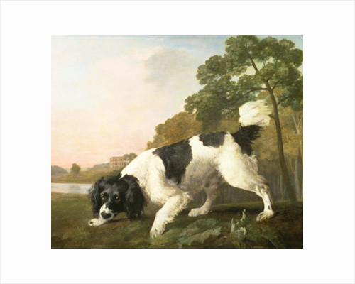 A Spaniel in a Landscape, 1771 by George Stubbs