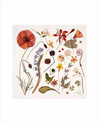 Hannah's Poppy by Rachel Pedder-Smith