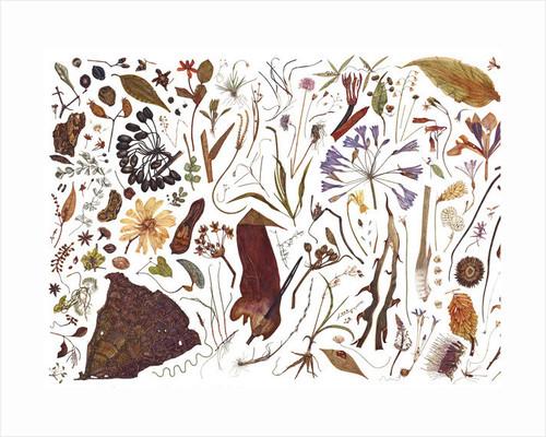 Herbarium Specimen Painting sheet 1 by Rachel Pedder-Smith