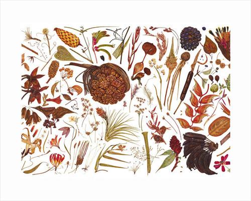 Herbarium Specimen Painting by Rachel Pedder-Smith