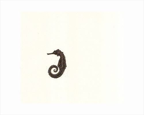 Seahorse and Sand by Rachel Pedder-Smith