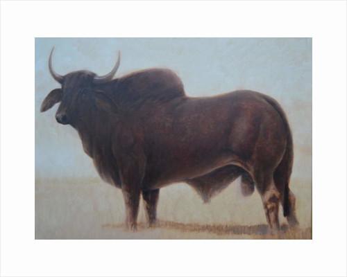 Brahmin Bull by Lincoln Seligman