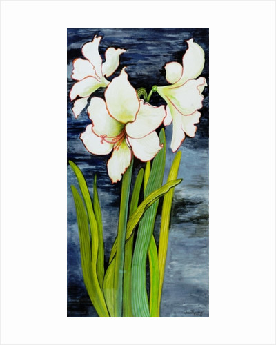Amaryllis against a night sky by Joan Thewsey