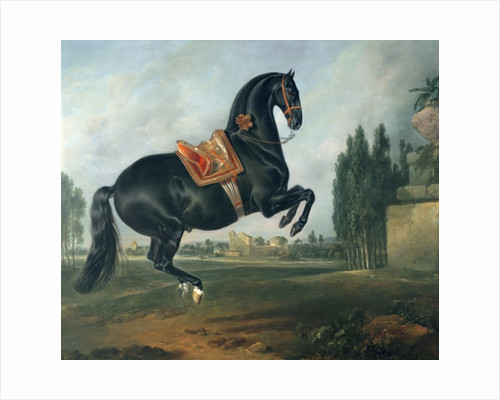 A black horse performing the Courbette by Johann Georg Hamilton