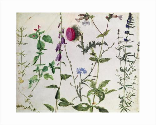 Eight Studies of Wild Flowers by Albrecht Dürer or Duerer