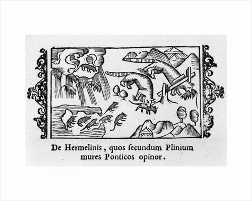 Migration of lemmings by Italian School