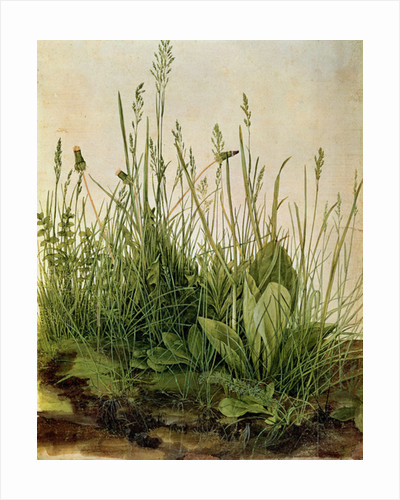 The Great Piece of Turf by Albrecht Dürer or Duerer