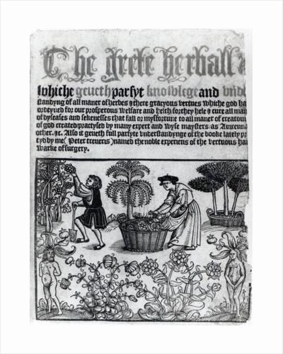 Medieval Herb Garden by English School