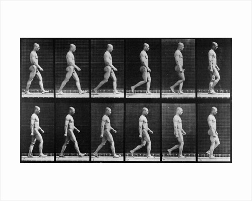 Man walking by Eadweard Muybridge
