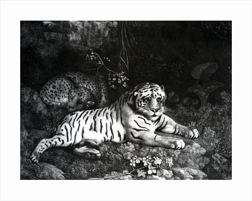 Two Tigers by George Stubbs