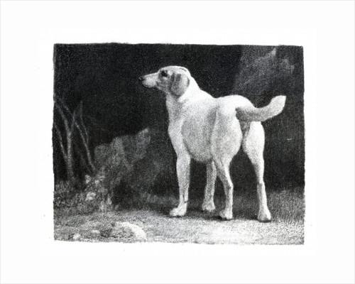 Dog by George Stubbs