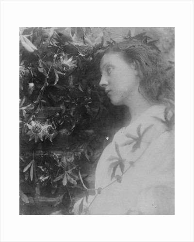 Illustration for the poem 'Maud' by Alfred, Lord Tennyson by Julia Margaret Cameron