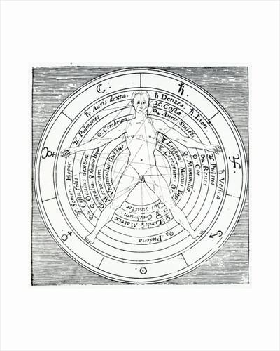 Vitruvian figure by English School