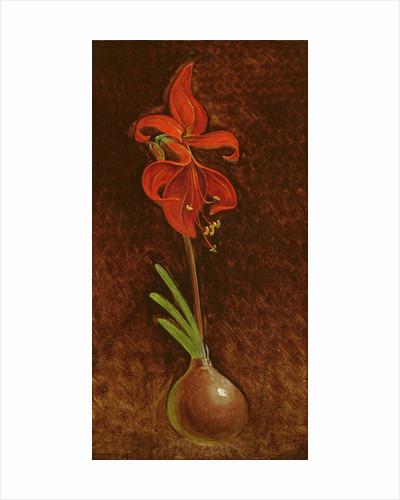 Amaryllis Formosissima by Philipp Otto Runge