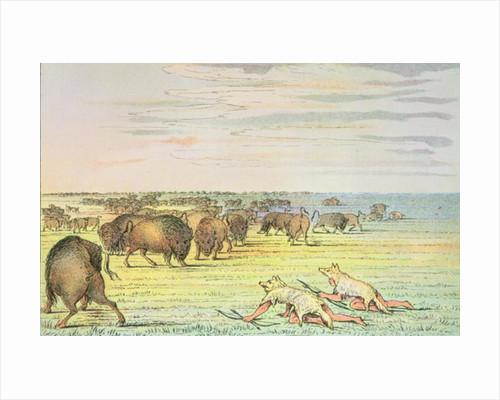 Stalking buffalo by George Catlin