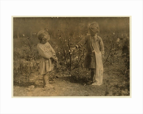 Millie, aged 4 picks 8 pounds of cotton a day and Nellie 5, picks 30 on a farm near Houston by Lewis Wickes Hine