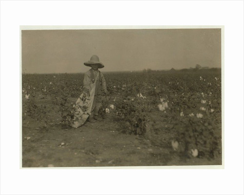 5 year old Willie Hesse picks 15 pounds of cotton a day on his parents' 80 acre farm near West by Lewis Wickes Hine