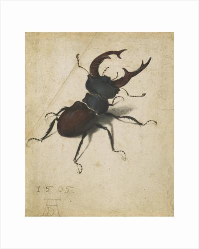 Stag beetle by Albrecht Dürer or Duerer