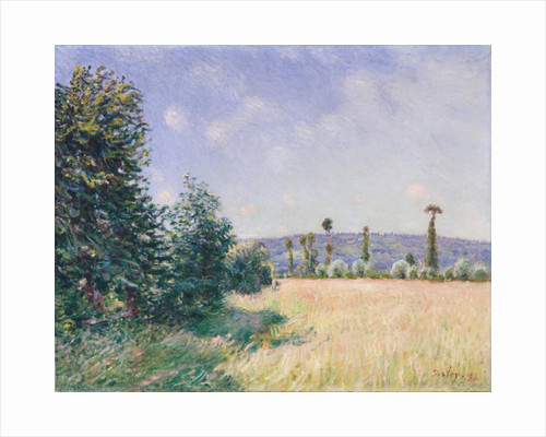 Sahurs Meadows in Morning Sun, 1894 by Alfred Sisley