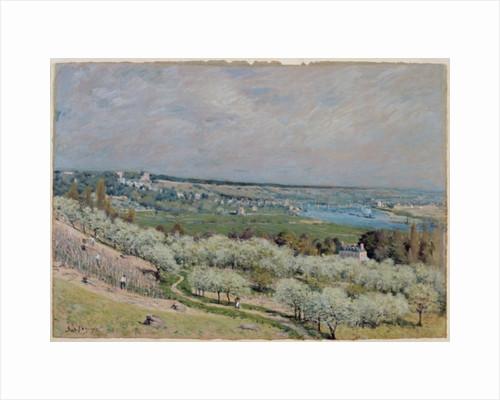 The Terrace at Saint-Germain, Spring by Alfred Sisley