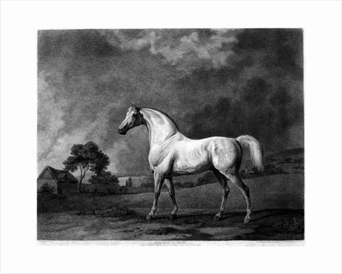 Mambrino, engraved by George Townley Stubbs by George Stubbs