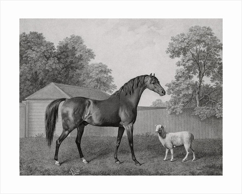 Dungannon by George Stubbs