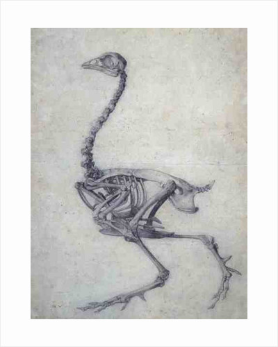 The Skeleton of a Fowl by George Stubbs