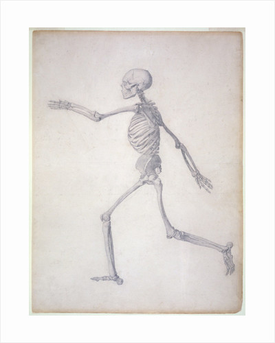 The Human Skeleton, lateral view by George Stubbs