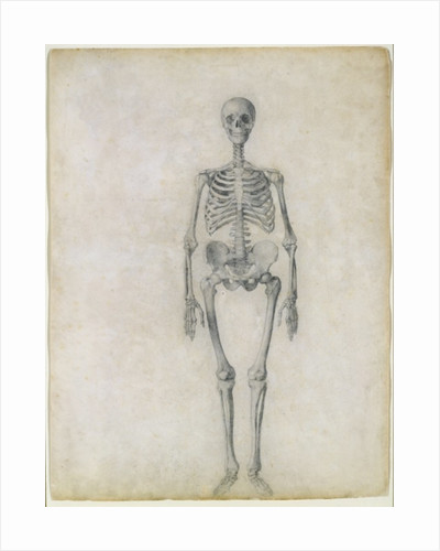 The Human Skeleton, anterior view by George Stubbs