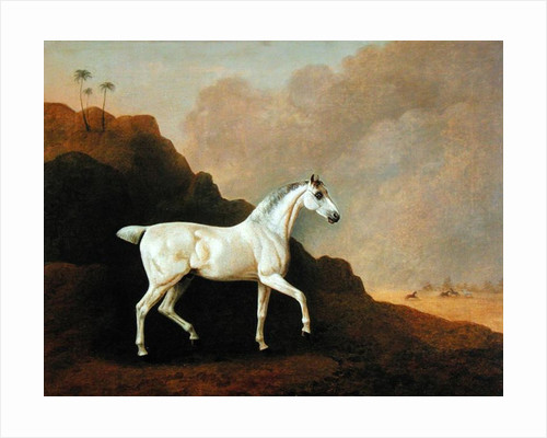 A Grey Arab Stallion in a Desert Landscape by John Boultbee