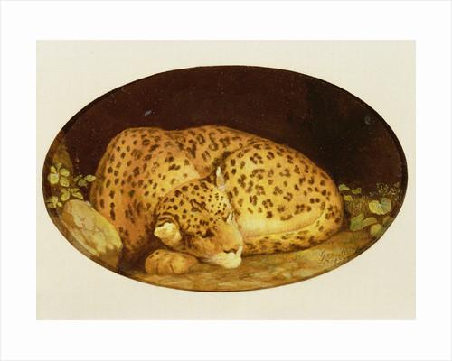 Sleeping Leopard by George Stubbs