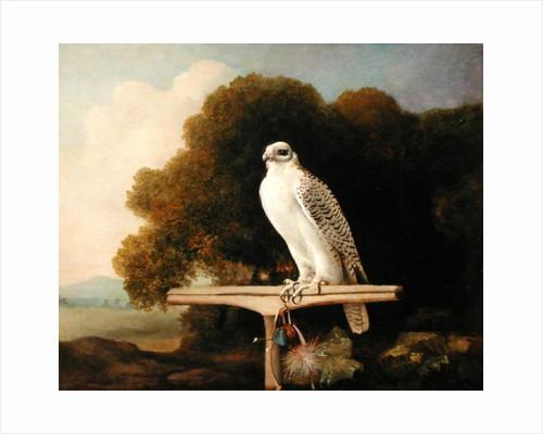 Greenland Falcon (Grey Falcon) by George Stubbs