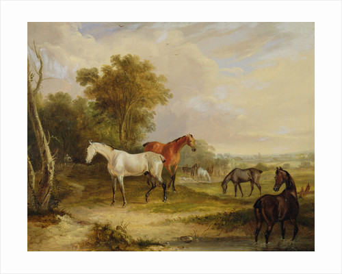 Horses Grazing: A Grey Stallion grazing with Mares in a Meadow by Francis Calcraft Turner
